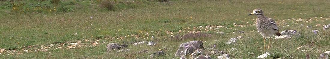 Association de Sauvegarde de l'Environnement d'Epône
